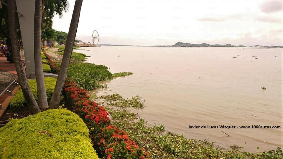 El cauce del Río Guayas, a su paso por el centro de Guayaquil