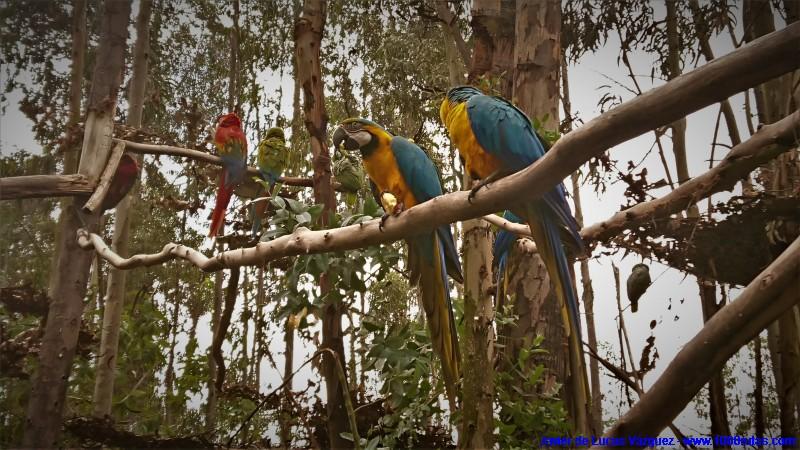 Coloridas aves autóctonas