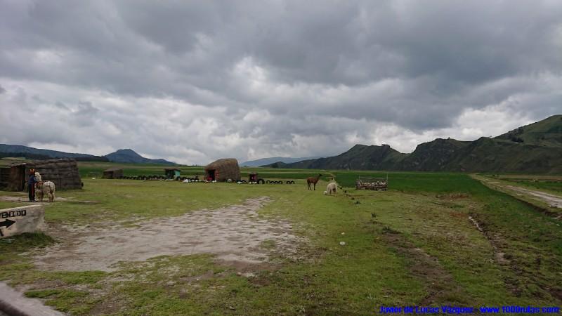Llamas y alpacas en el altiplano