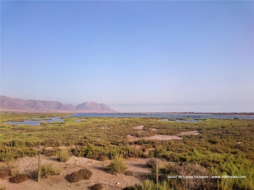 Laguna del Cabo de Gata. Humedal