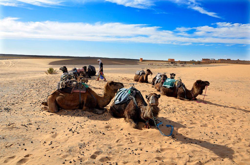 Erg Chebbi, el turístico Sáhara marroquí