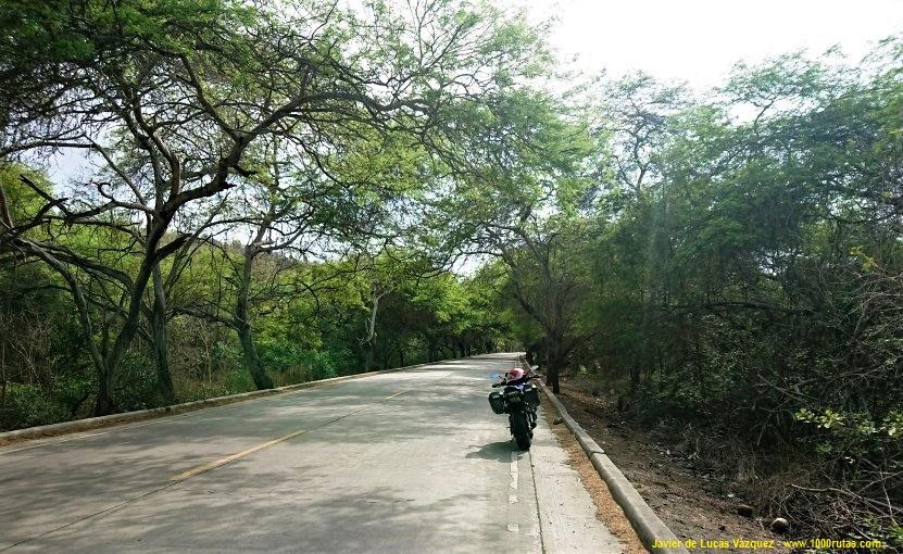 Los árboles cubren casi por completo el cielo convirtiendo la carretera en un tunel, antés de llegar a Puerto López