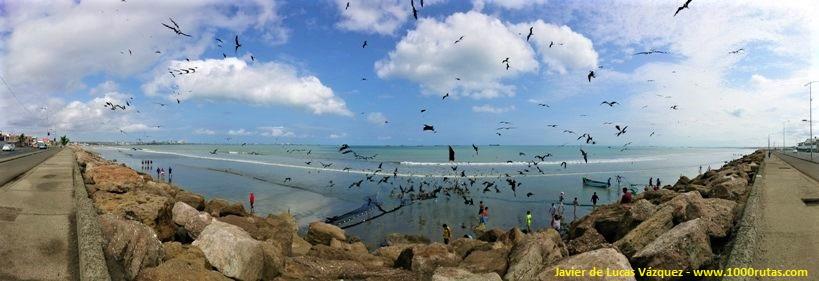 Pescadores recogiendo las redes y aves acechando en busca de su festín.