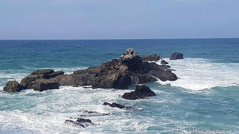 Los lobos de mar descansan sobre la roca azotada por el oleaje oceánico.