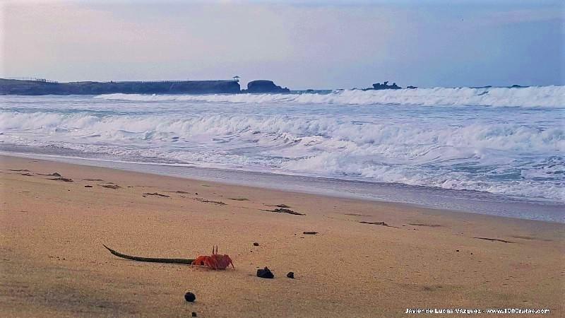 La arena está llena de cangrejos que huyen en todas las direcciones a mi paso.